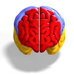 היכולת המופלאה של המוח